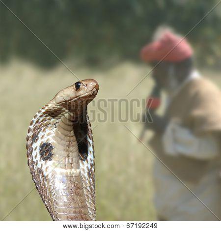 Cobra And Catcher