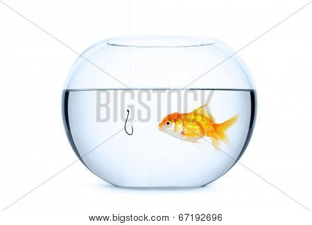 Close up of glass aquarium full of water, isolated on white