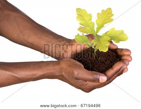 Hands holding a small plant