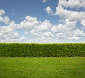 stock photo of tall grass  - Green hedge fence on the grass with copy space - JPG