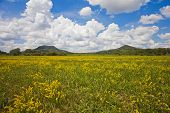 picture of kali  - Landscape with hills nice clouscape and a flowery meadow in front near to Lake Balaton Hungary - JPG