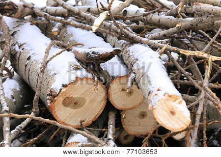 Four Sawn Logs And Twigs In The Snow