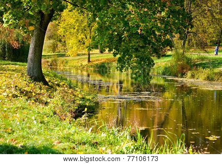Tree With Green Leaves Near The Water,