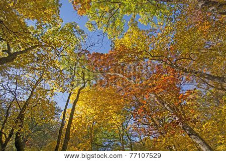 Under A Colorful Fall Canopy