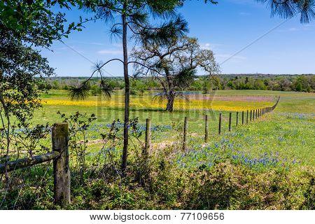 A Texas Field Field of Wildflowers