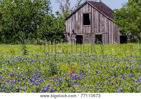 Old Wooden Barn in a Texas Field of Wildflowers