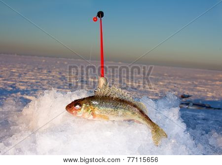Ice Fishing Rod And Ruff