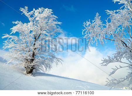 Frozen tree on winter field. Blue sky background