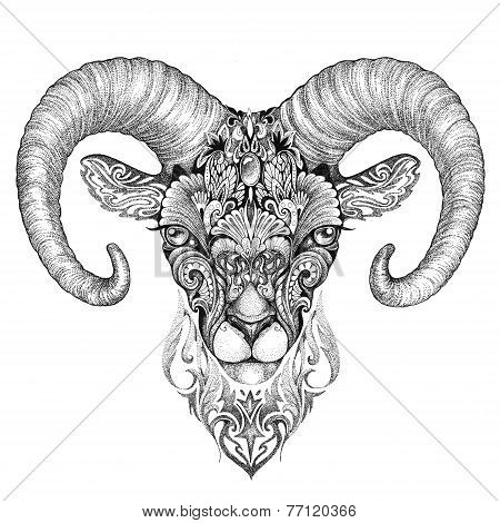 Mountain Sheep, Argali, Black And White Ink Drawing