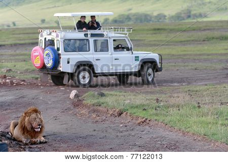 Wild Male Lion Resting Near A Jeep With Tourists.