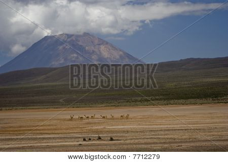 Pampa Canhauas And Volcano El Misti
