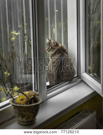 cat sits on the windowsill