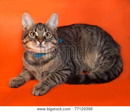 Tabby Kitten With Yellow Eyes In Blue Collar Lying On Orange