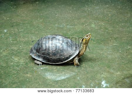 Turtle on Wet Floor