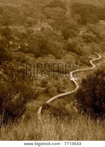 Forrest walkway