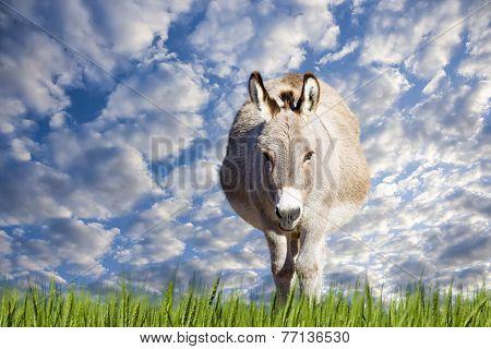 Texas Donkey On A Sunny Day