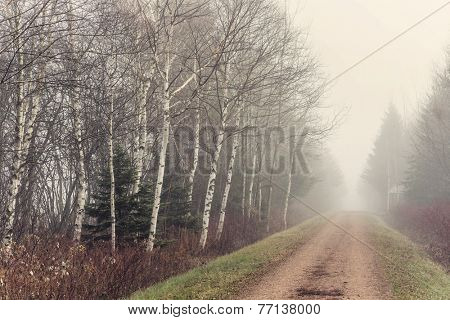 The Trans Canada trail on a foggy november day.  Also know as the Confederation Trail.  It runs the length of Prince Edward Island, Canada.