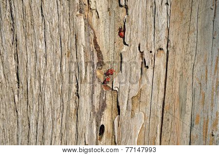 Firebug Wood Background