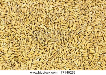 background peeled oat seeds