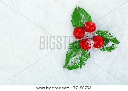 European Holly (Ilex aquifolium) with berries on snow, close up