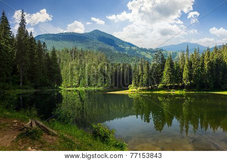 Pine Forest Near The Mountain Lake