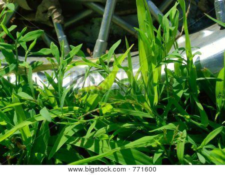 Rim in the Grass