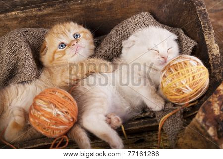 kittens sleeping with a ball of wool