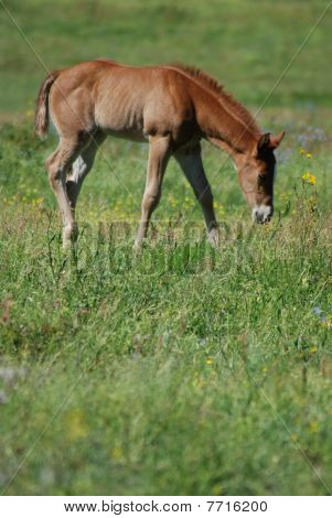 Foal and Grass