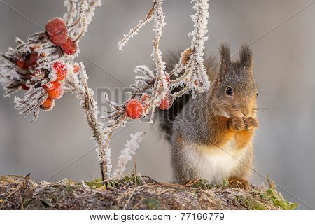 Ice Stand Of Squirrel