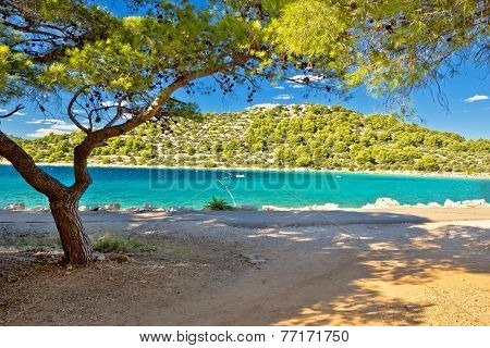 Turquoise Pine Tree Beach Of Croatia