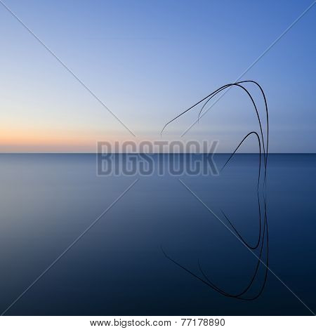Conceptual Image Of Reeds Reflected In Still Water
