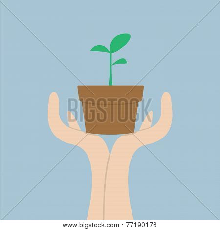 Hands Holding Small Plant, Growth Concept