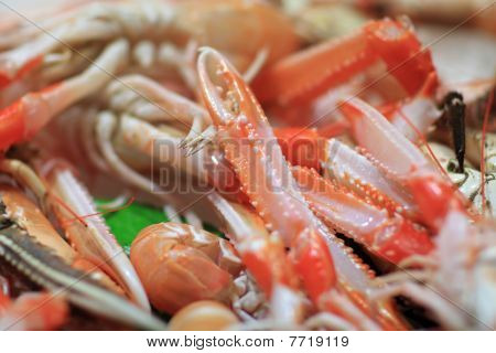 Feelers Of Prawn