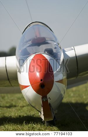 Portrait of a glider on grass