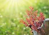 stock photo of afforestation  - Stem the growth of the seedlings - JPG