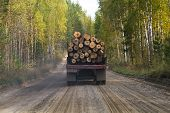 picture of logging truck  - truck carrying wood on a dirt road