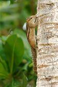 picture of chipmunks  - Chipmunk on the tree - JPG