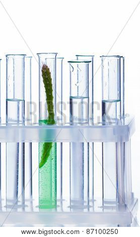 Chemical Glass Tube With A Plant