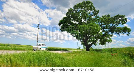 Tree And Car