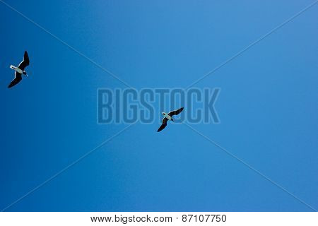 Seagulls Flying in The Blue Sky.