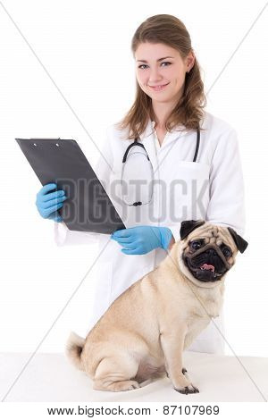Vet Doctor Checking Pug Dog Isolated On White