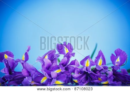 Beautiful Bouquet Of Flowers Irises