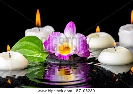 Spa Background Of Purple Orchid Dendrobium, Green Leaf With Dew And Candles On Black Zen Stone In Ri