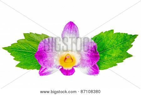 Composition Of Dendrobium Flower And Hibiscus Green Leaves Is Isolated On White Background, Closeup