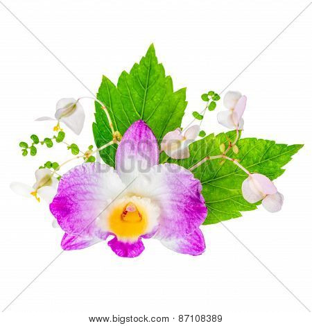 Beautiful Composition Of Dendrobium, Begonia Flower And Hibiscus Green Leaves Is Isolated On White B