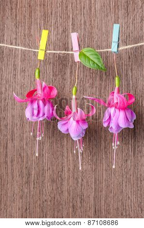 Fuchsia Flowers Handing On Rope With Colorful Clothespin On Wooden Background, Closeup