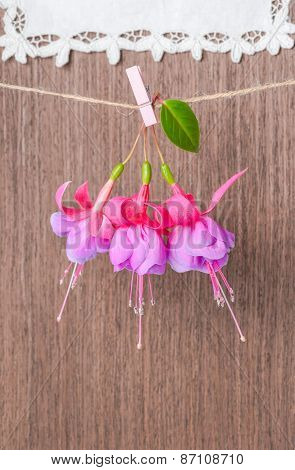 Fuchsia Flowers Handing On Rope With Clothespin On Wooden And Lacy Napkin Background, Closeup