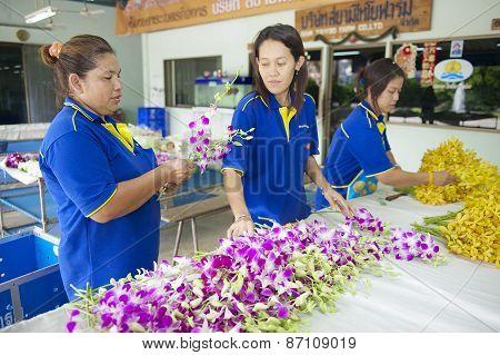 Women work at the orchid farm in Samut Songkram, Thailand.