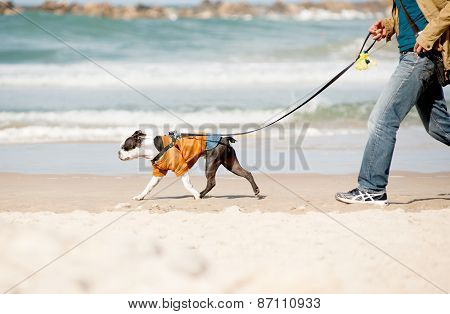 Dog With Owner On A Beach
