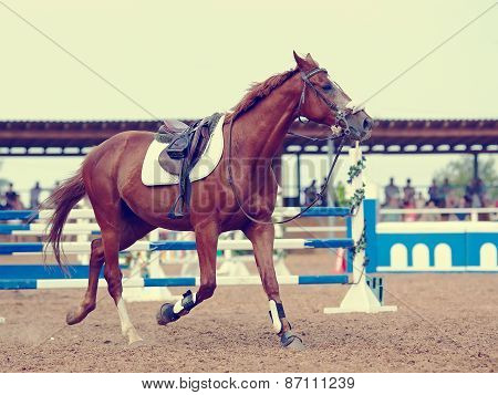 Sports Horse.